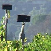 """Biosonorità  tra le vigne del """" Paradiso"""""""