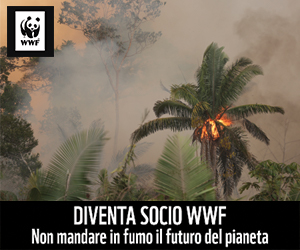 WWF Settembre